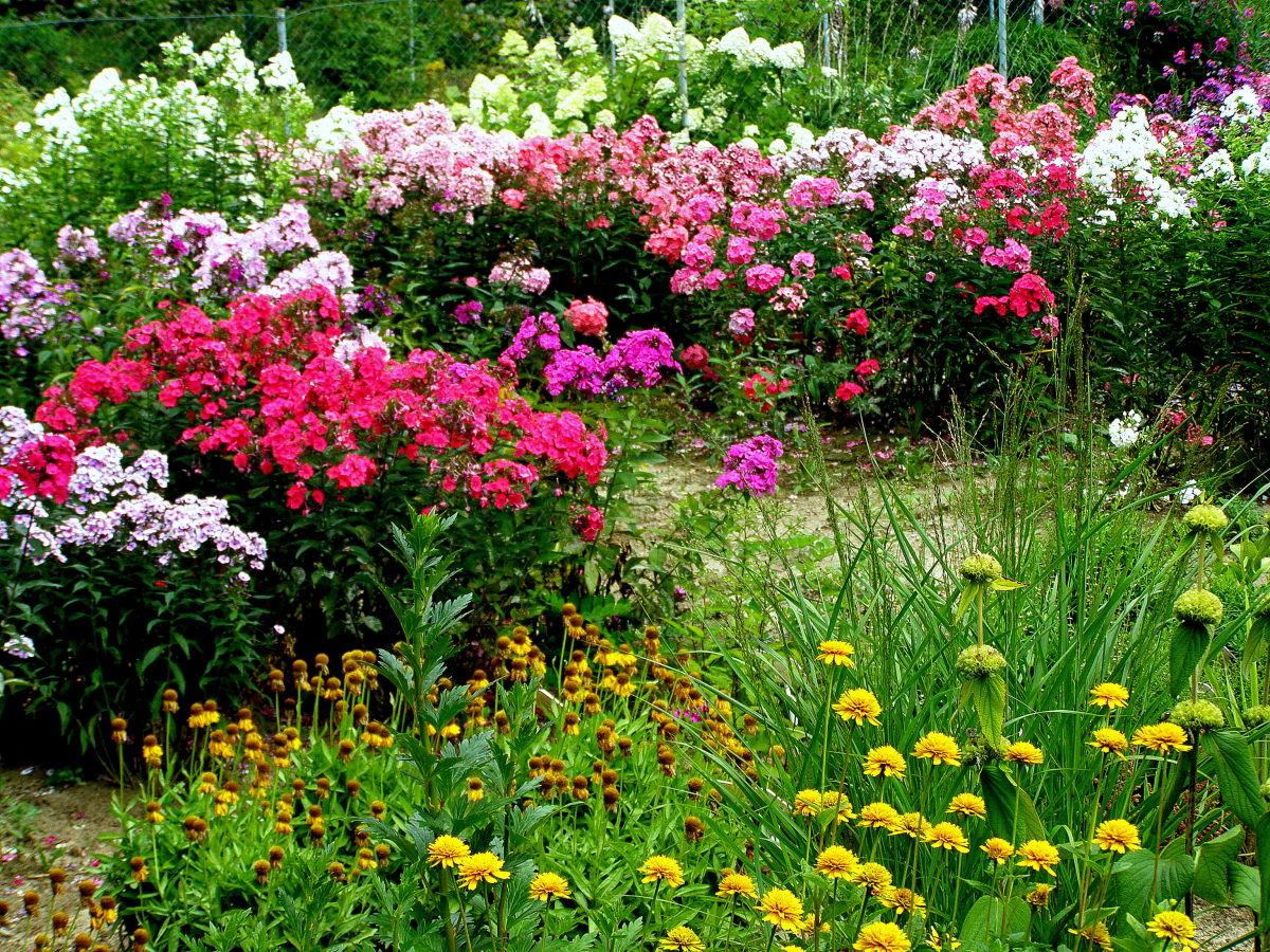 цветы цветущие в августе фото строительные, сельскохозяйственные, ландшафтные