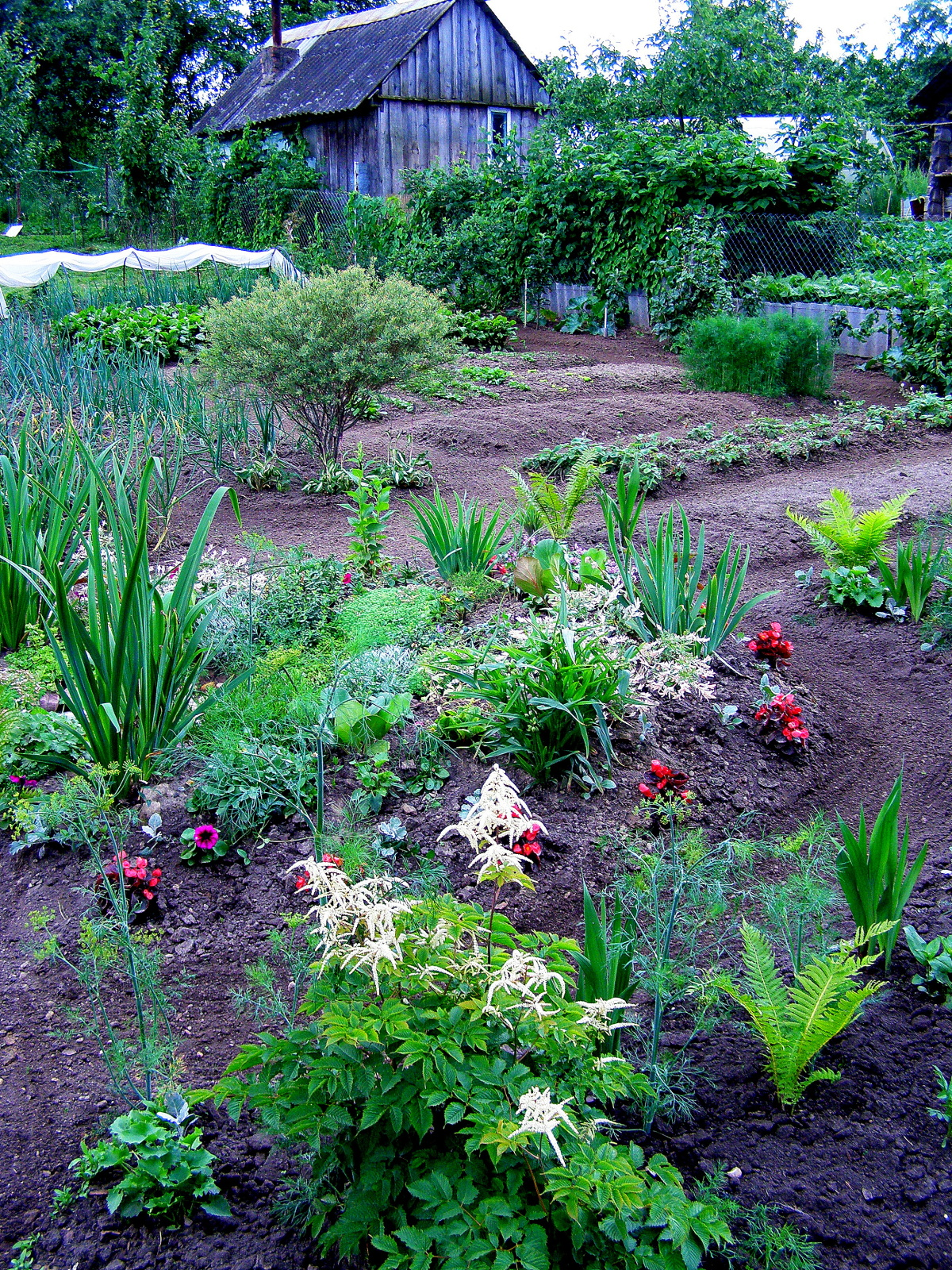 доставка цветник в саду и огороде фото некоторых случаях