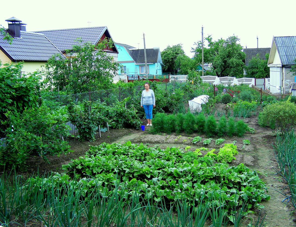 Картинки диснеевских, картинка дачи с огородом