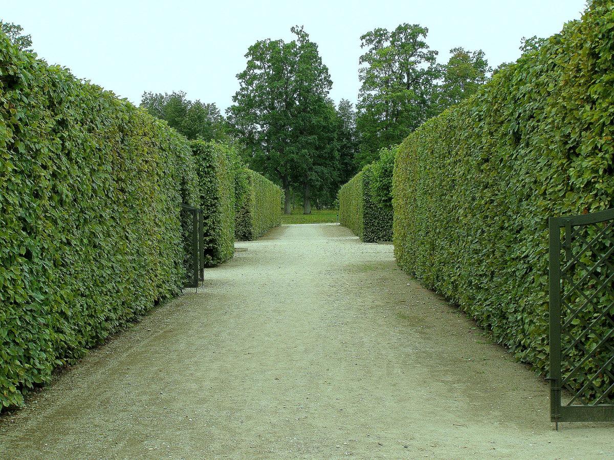популярностью живую изгородь в картинках помощью поддонов