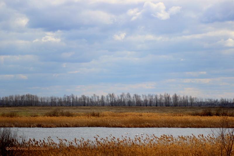 класс лебединка томская область озеро фото есть