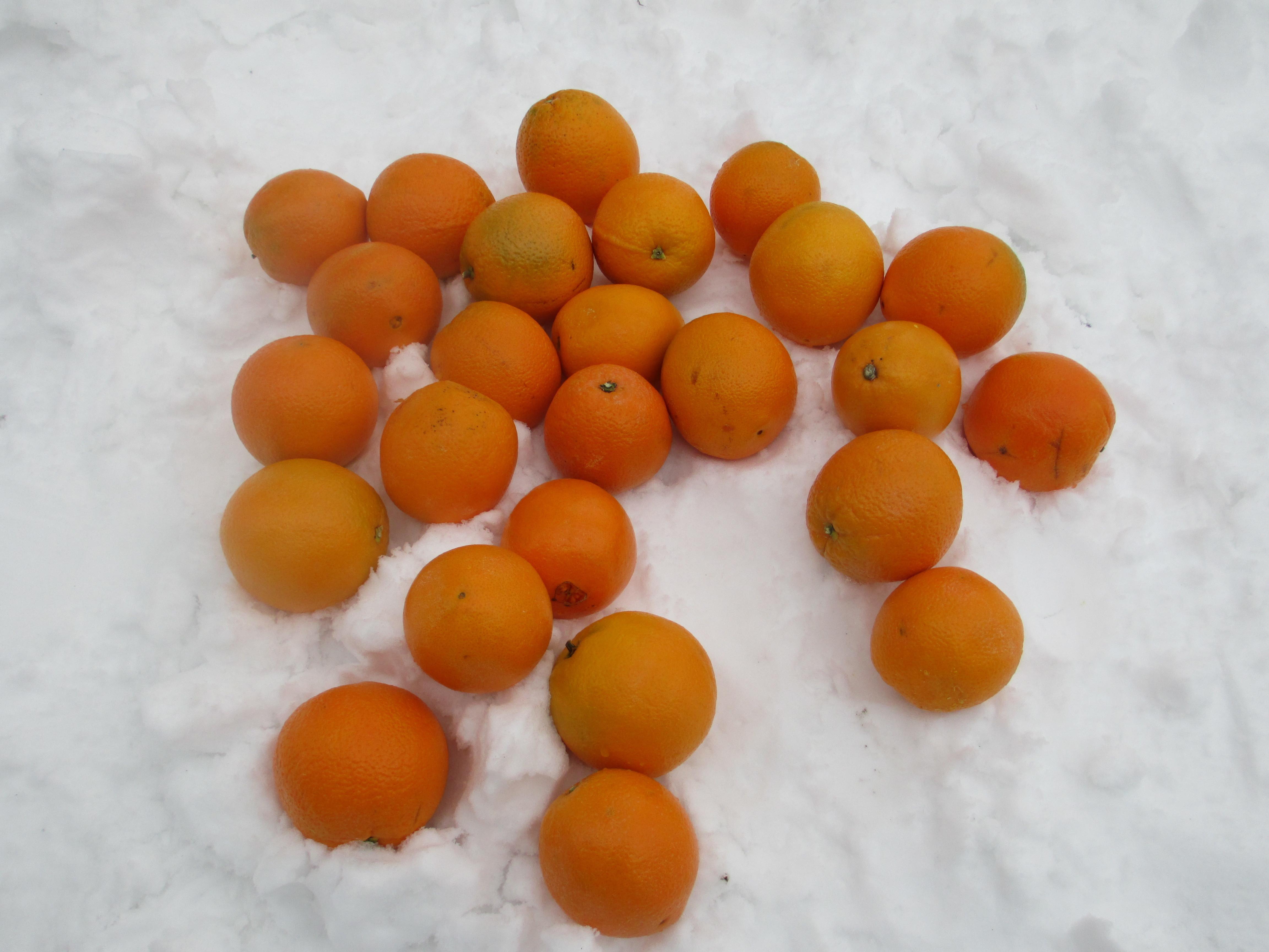 понимать, картинки апельсины на снегу желание ланового