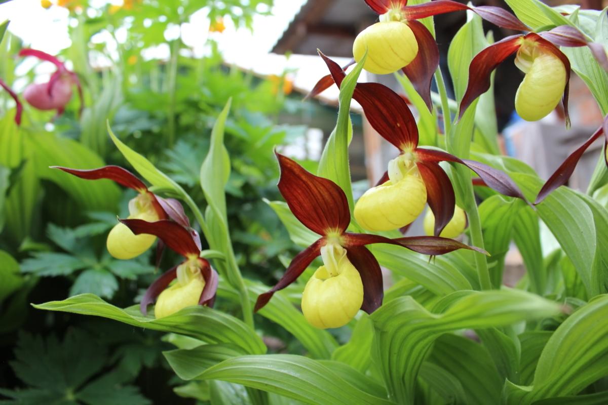 Самые редкие цветы в мире. Увидеть их удалось не многим.